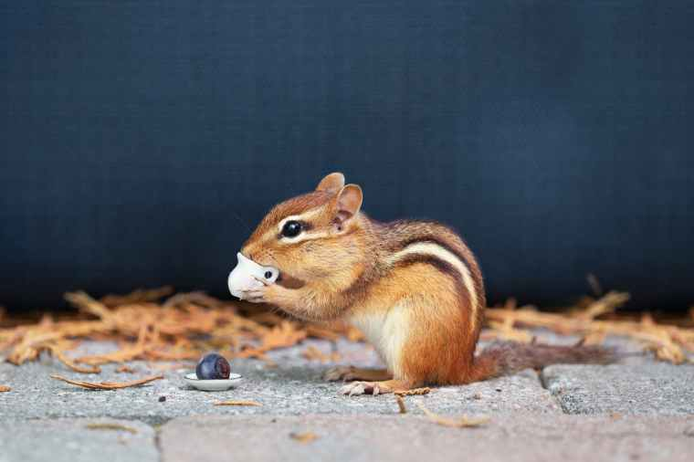 chipmunk holding teapot toy