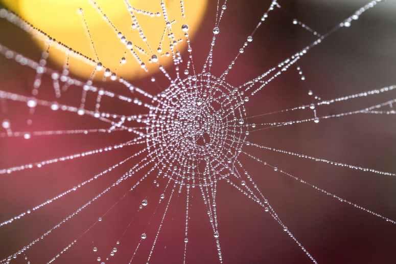 arachnid artistic blur close up